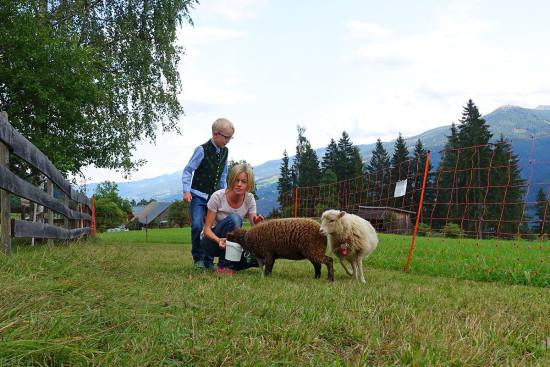 Zwergschafe im Kinderparadies im Hotel Leit'n-Franz in Ramsau